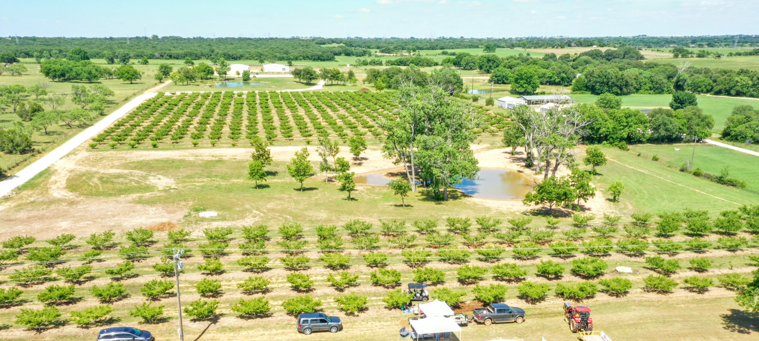 So you want to start a peach orchard?